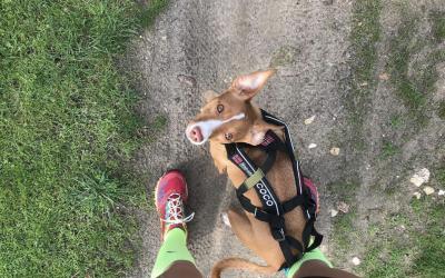 Probamos el Arnés de Non-Stop Dogwear
